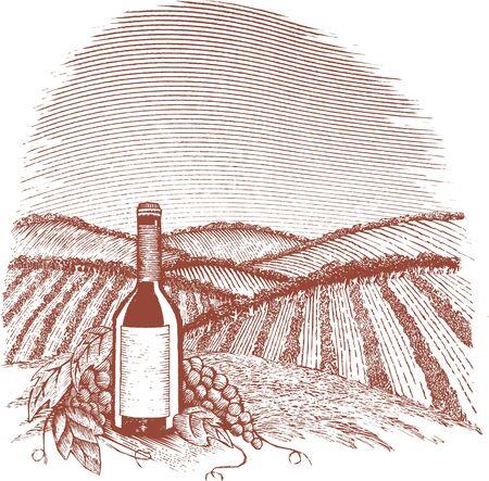Woodcut style illustration of a vineyard. Illustration