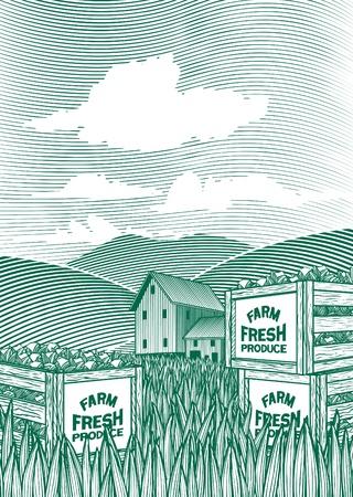 Illustration de style de gravure sur bois de caisses de légumes assis sur le sol avec une grange en arrière-plan.