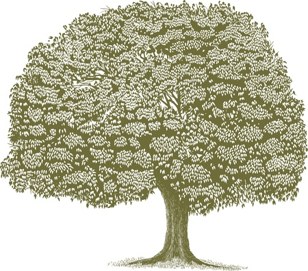 Woodcut style illustration of a single tree  Illustration
