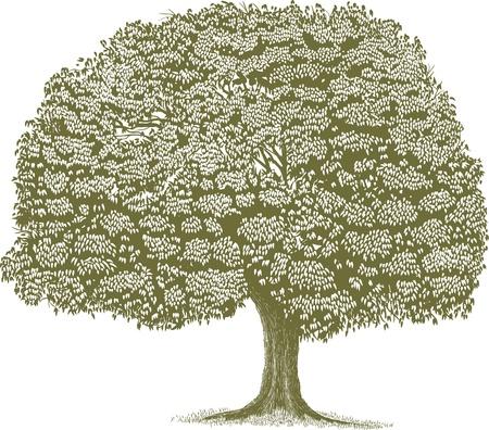 scratch board: Woodcut style illustration of a single tree  Illustration