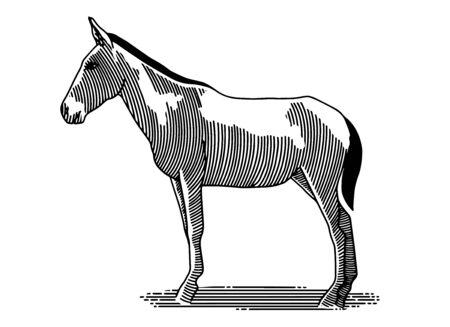 Illustration du côté d'un mulet debout.