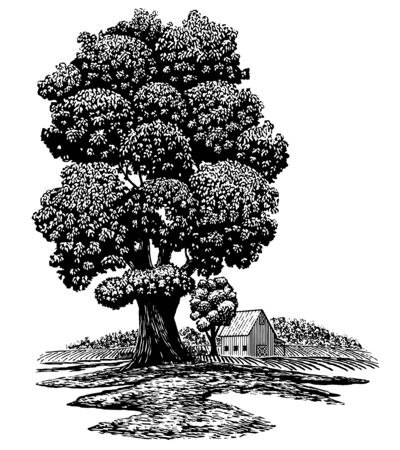 Woodcut illustration of an old tree in the foreground with a barn in the background. Illusztráció