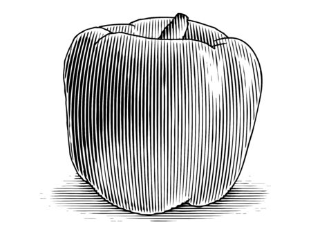 Woodcut illustration of a bell pepper isolated.