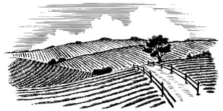 Woodcut illustration of a road flowing through farm fields. Banque d'images - 131641211