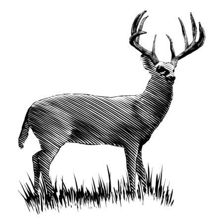 Woodcut-style illustration of a full-grown buck isolated.