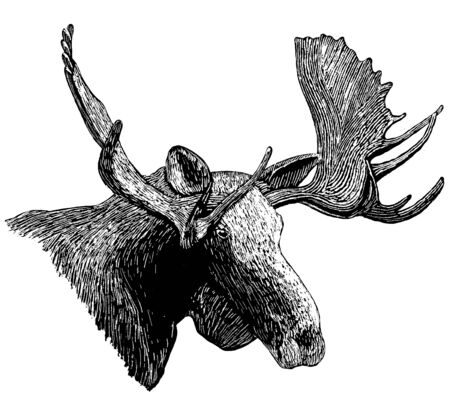 Woodcut style illustration of a moose head. Standard-Bild - 133200834