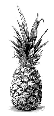 Woodcut illustration of a pineapple isolated on white.
