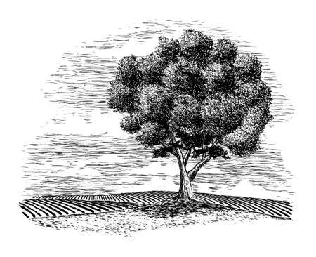 Woodcut illustration of a rural countryside with a tree in the foreground. Ilustrace