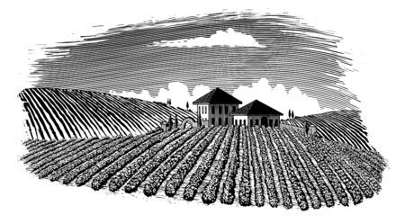 Woodcut-style illustration of a vineyard landscape with rolling hills in the background. Illusztráció