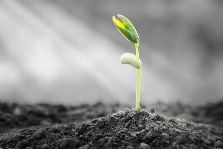 植物がアスファルト、明るい希望の人生と成功のための記号が現れます。