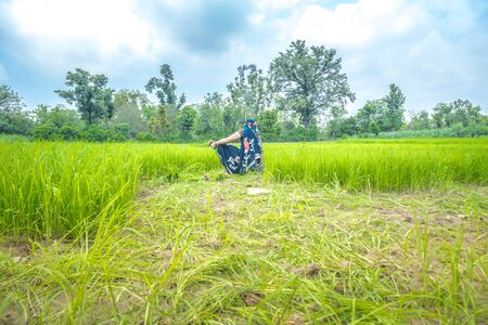 Indian farmer working in the rice paddy field. Rice seedling on rice field, Ready for planting. Imagens