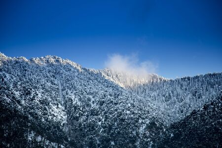 Snowy mountains and pine trees in India Banco de Imagens