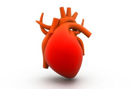 vascular tissue: 3d render of human heart