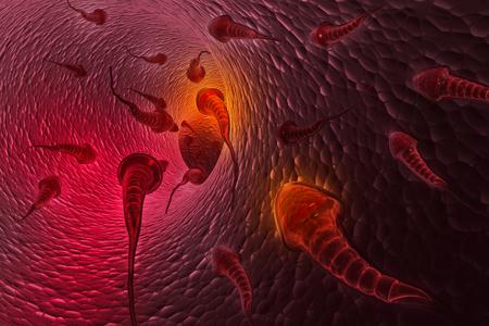 Human sperm    photo
