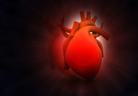 heart muscle cells: Human heart on abstract dark background