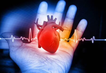 sick leave: Human Heart  in hand Stock Photo