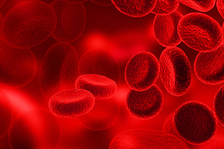 blood flow: Red Blood Cells, streaming of human blood cells