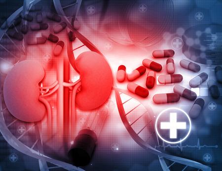estudiar: 3d rinden de riñón humano con medicamentos Foto de archivo