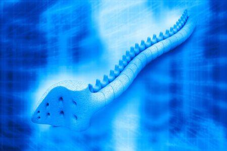 respire: 3d render of spine