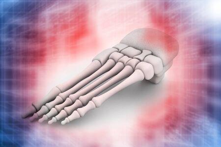 metatarsal: 3d render of human foot skeleton