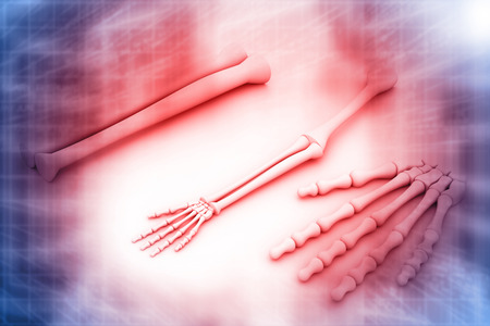 radiogram: 3d render of arm skeleton