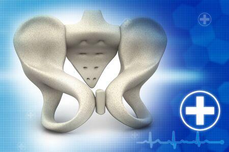 pubis: Human pelvis  on medical background