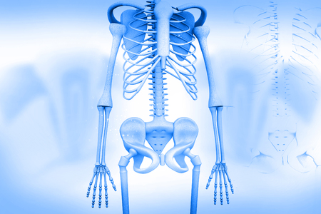 skeleton anatomy: 3d render of human skeleton Stock Photo