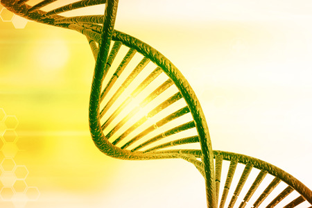 genomes: DNA molecules