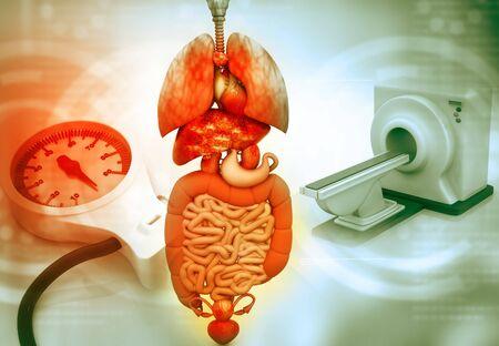 resonancia magnetica: 3D de procesamiento de esc�ner de im�genes de resonancia magn�tica, esc�ner MRI, CT con �rganos humanos
