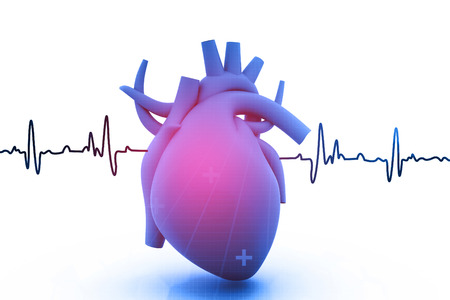 Human heart with ecg graph on  white background