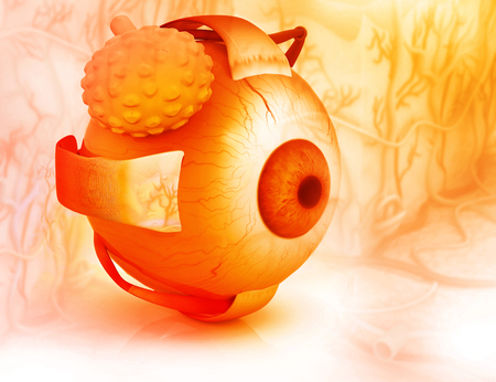 optometry: 3d render of Human eye structure Stock Photo