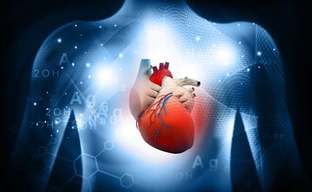 Anatomie médicale du coeur humain 3D Banque d'images - 76967460