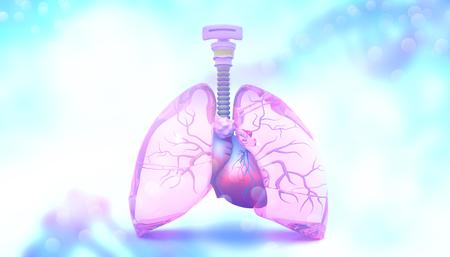 Menselijke longen. 3D illustratie