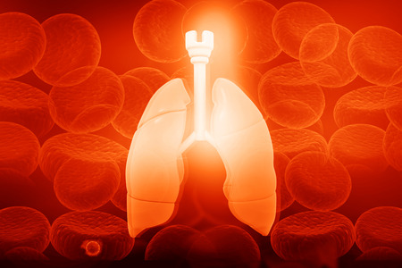 Human lungs in blood cells background