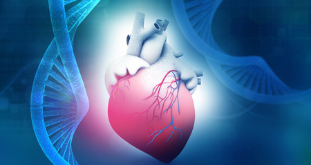 Human heart anatomy with dna abstract background. 3d illustration