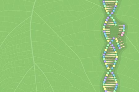 DNA molecule on leaf, vector illustration