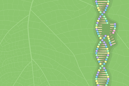 DNA molecule on leaf, vector illustration