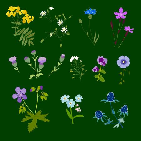 Ensemble de fleurs des champs, illustration vectorielle Vecteurs