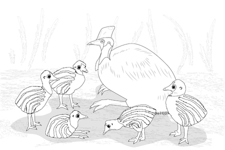 Adult cassowary with nestling, black and white vector illustration Illustration
