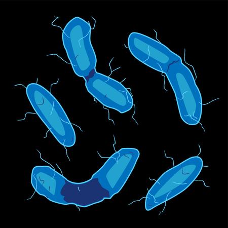 Group of Aquificales bacterias on black background, vector illustration Ilustração