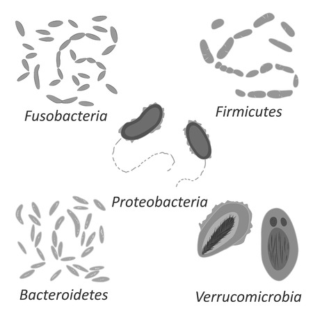 Set of different types of bacterias of human microbiome, black and white vector illustration