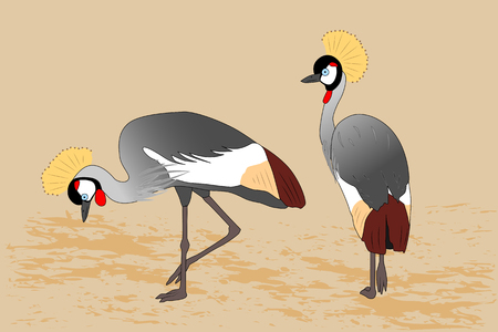 Two standing gray crowned cranes, vector illustration Banque d'images - 109925653