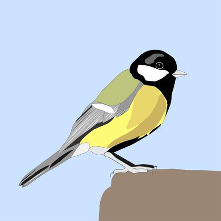 Great titmouse sitting on rock, vector ilustration