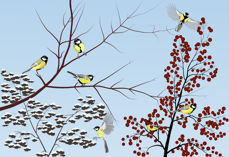 Group of great titmouses sitting on winter branches, vector illustration