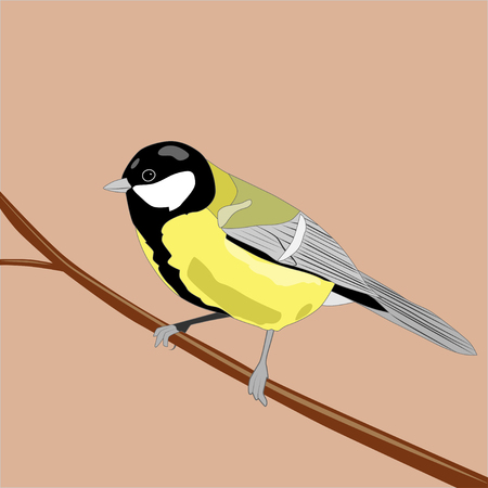 Great titmouse sitting on branch, vector ilustration