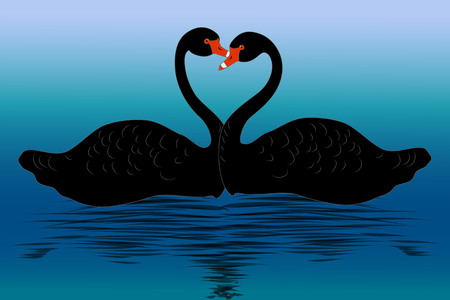 Two black swans on water, vector illustration