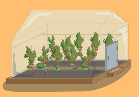 Greenhouse with tomato plants, vector illustration