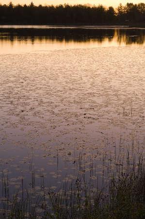 bliss: Early morning golden Bliss Pond