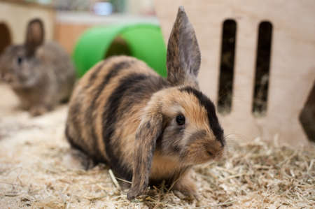 hutch: Rabbit in Hutch