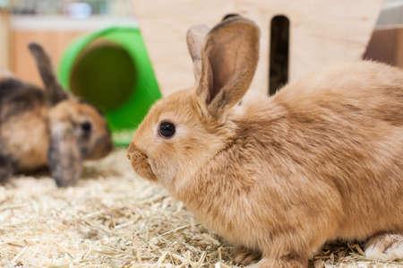 hutch: Rabbits playing in Hutch